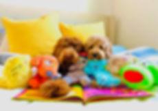 Pet Toys Front Image Website.jpeg