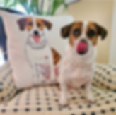 style pillow with jack russell mix dog.p