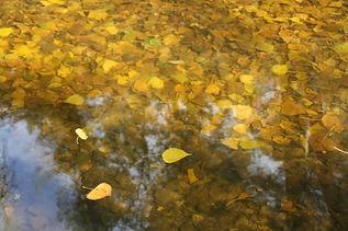 Cartel Senda de los Pescadores otoño.jpg