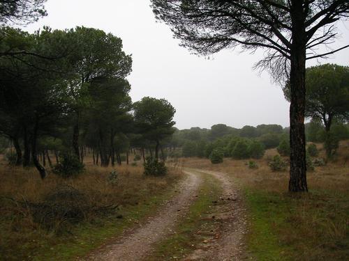 Alcornocal de Valdegalindo