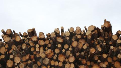 Lo que la madera se llevó