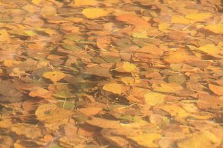 Cartel Senda de los Pescadores otoño fot