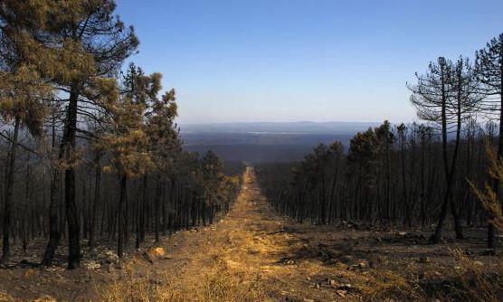 Cortafuegos en la sierra de Teleno, tras el incendio de 2012