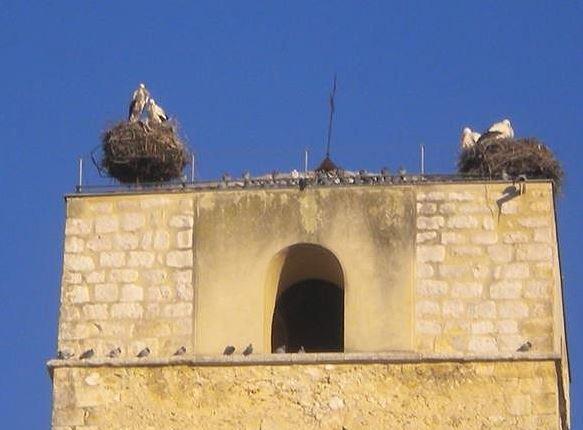 Cigüeñas en Cuéllar