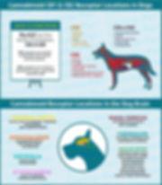 cbd dog chart.jpg