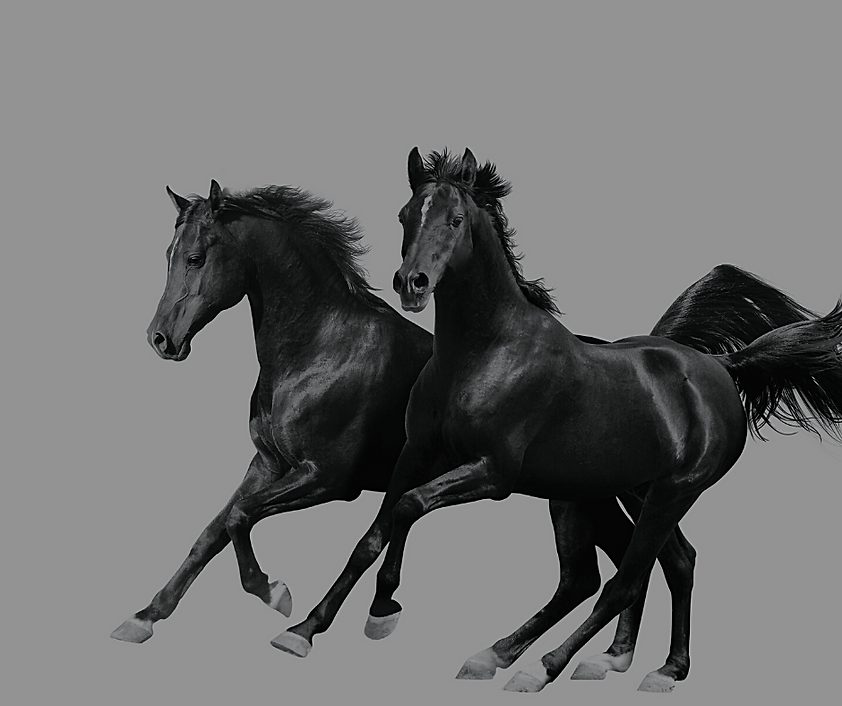 black hhorse.png