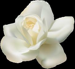 FAVPNG_arabian-jasmine-tea-clip-art_EkQG