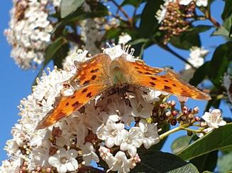 vlinder%2020200323_edited.jpg