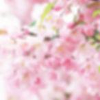 37760225-pink-flowers-wallpaper.jpg