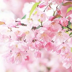 37760225-pink-flowers-wallpaper.jpg