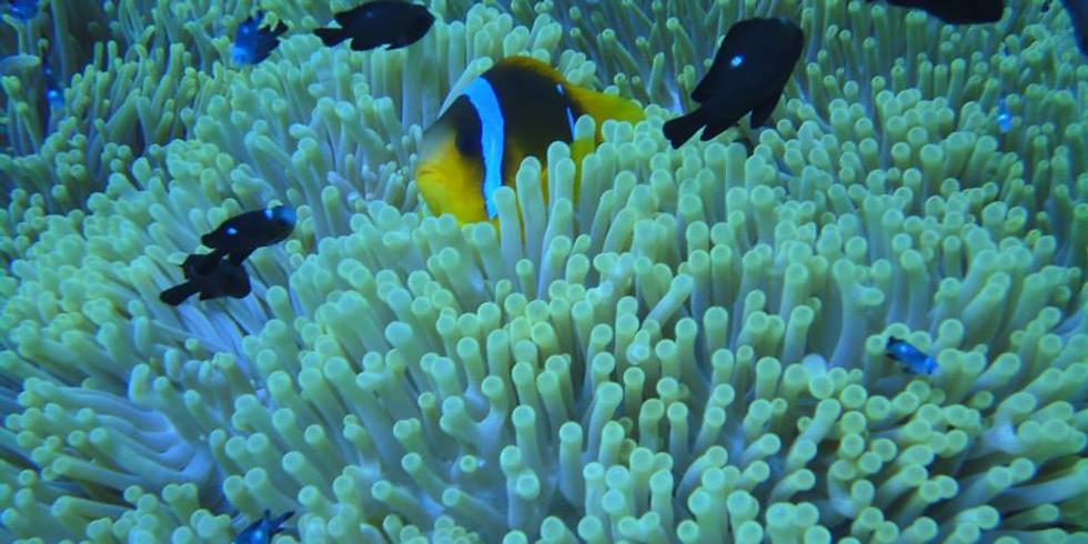 Sodwana Dive Trip