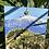 Thumbnail: Chamerops Palm