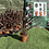 Thumbnail: Cordyline - Red