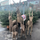"Thumbnail: Reindeer 100"""