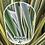 Thumbnail: Phormium - Green (1.2 metre)