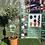 Thumbnail: Olive Tree - Standard (small)