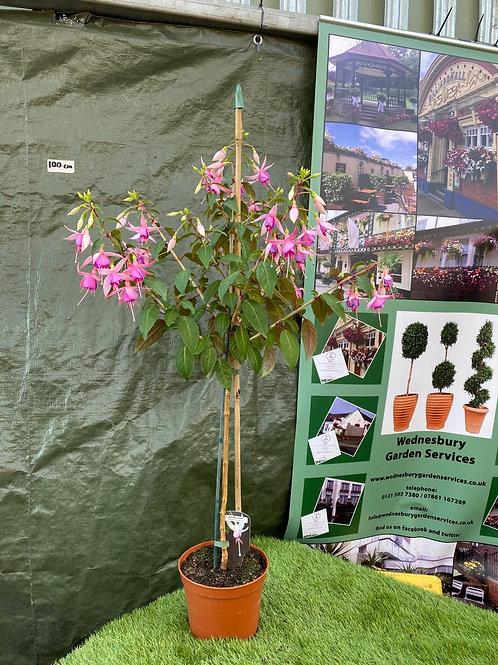 Standard Fuchsia Pink - Large