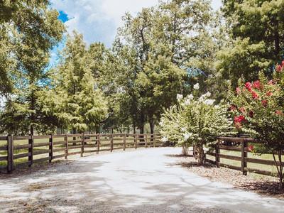 myrtletrees.jpg