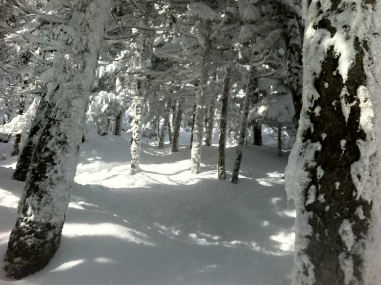 OUT_backcountry_winter_woods.jpg