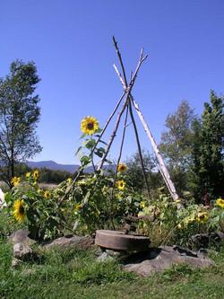 OUT_Tipi_Gardens_2.jpg