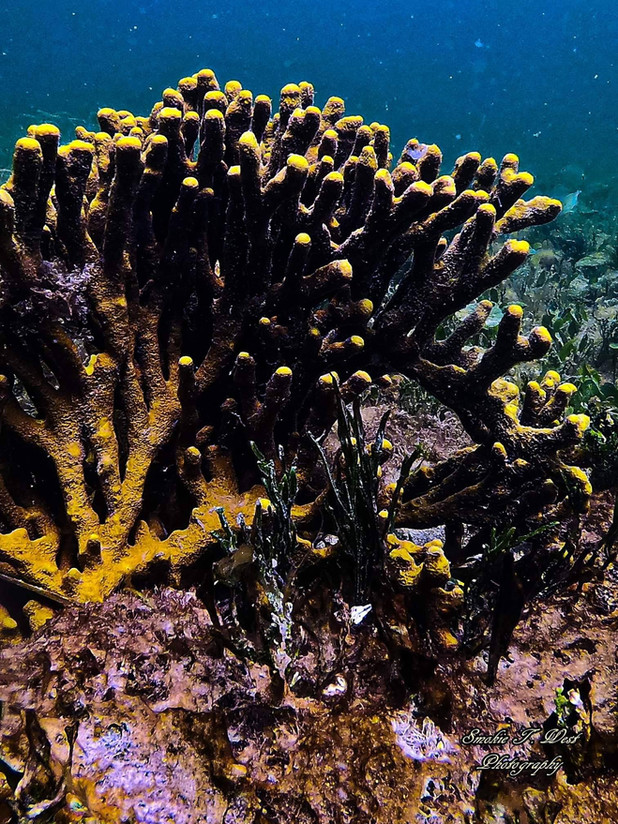 Coral & Sponge Beds to snorkel