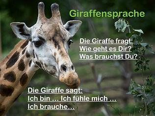 giraffe-5396260_1280.jpeg