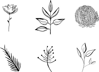 Floral Sketches