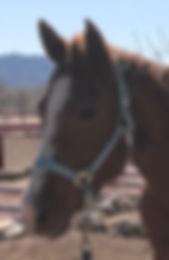 Penny headshot .jpg