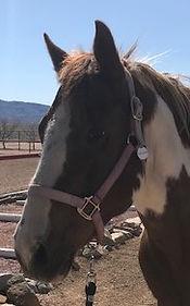 Cheyenne headshot.jpg
