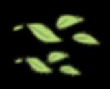 hojas-16.png