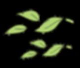 hojas-17.png