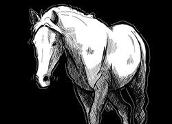 Crosshatch Horse
