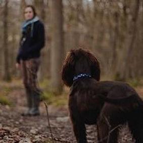 medium_dog-loyalty-400x300.jpeg