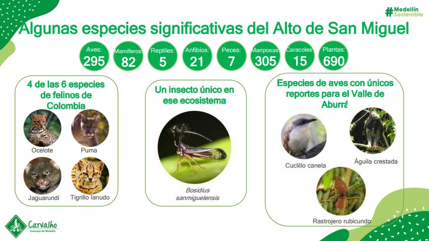 alto de san miguel biodiversidad