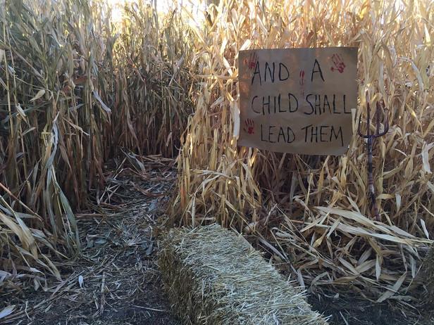 Corn Maze.jpg