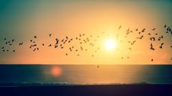 ציפורים עפות בשקיעה