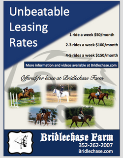 BF Available Horses Flier Design 1