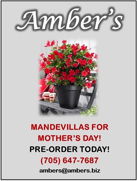 Ambers - Week 3.jpg