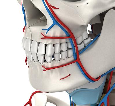 FACE anatomy CFMS Training 1