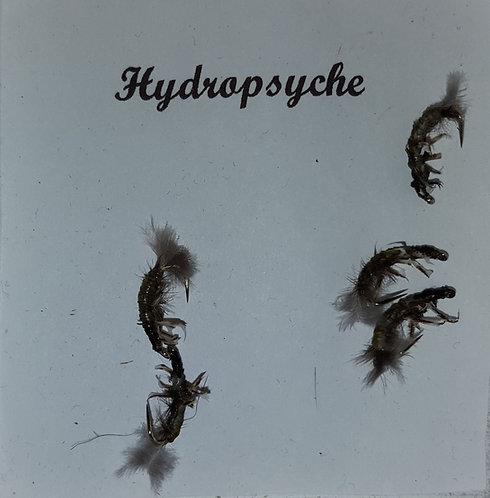 Hydropsyche