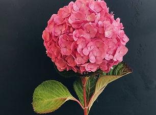 розовая гортензия, купить букет розовой гортензии, купить цветы, розовые цветы купить,