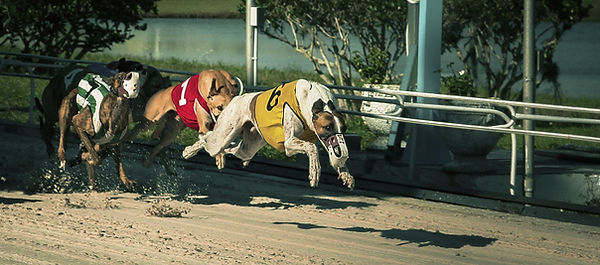 greyhound-race-banner.jpg