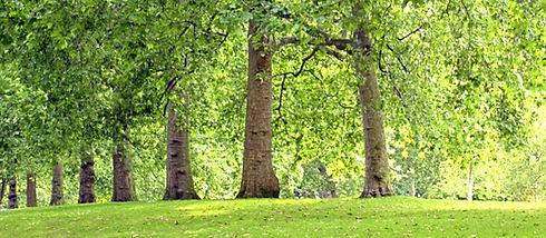 Tree Lined Park_edited_edited_edited_edited.jpg