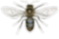 sweet-as-honey bee cut out image.png