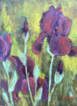 Purple Irises in the Garden