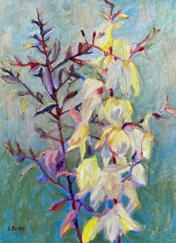 Yuca Blooms