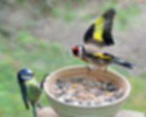 vechtende vogels.jpg