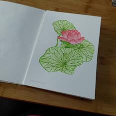 Helumbonaceae