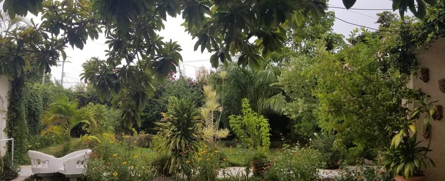 Jardin #1 Golden Age Merida