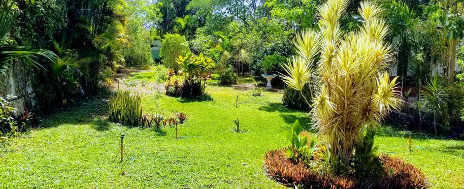 Jardin #2 Golden Age Merida